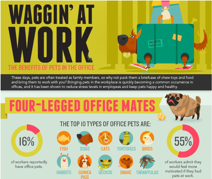 binatang di kantor